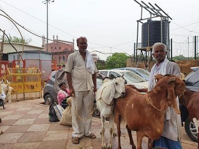कोविड: बकरीद के चलते सड़कों पर ग्राहक ढूंढते दिखे बिक्रेता, 3 लाख रुपये का बकरा सिर्फ डेढ़ लाख में उपलब्ध