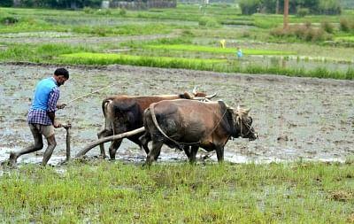 बुंदेलखंड के किसानों के लिए वरदान हैं औषधीय पौधे