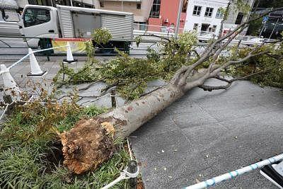 तूफान नेपार्टक जापान में दी दस्तक