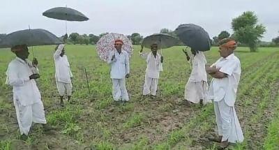 राजस्थान में किसानों के तेजाजी के गीत गाने से होती है बारिश? कैम्ब्रिज करेगा अनुसंधान