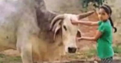 यूपी में ग्रामीणों ने बाबूजी बैल का शोक मनाया
