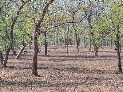 बिहार: बक्सर में काले हिरण को बचाने की कवायद, बनेगा रेस्क्यू सेंटर
