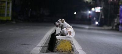 कर्नाटक में 150 आवारा कुत्तों को जिंदा दफनाने के आरोप में 12 लोग गिरफ्तार