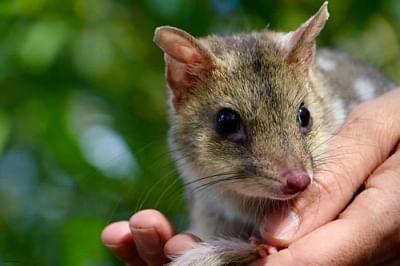 ऑस्ट्रेलियाई राज्य विलुप्त वन्यजीव प्रजातियों के लिए नया राष्ट्रीय उद्यान बनाएगा