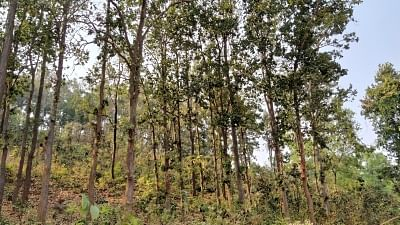 वन क्षेत्र बढ़ाने के लिए तमिलनाडु को मिलेगी केंद्र से वित्तीय सहायता