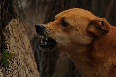 लॉस एंजिल्स में बढ़ रहे कुत्तों के रोग