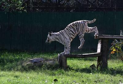 दक्षिणी दिल्ली में जानवरों के लिए तैयार होगा विशेष पार्क