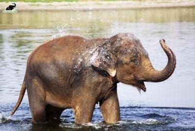 कोयंबटूर में जंगली हाथी ने किसान को कुचलकर मार डाला