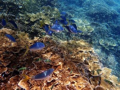 शोध से पता चला है कि प्लास्टिक से समुद्री जैव विविधता को कैसे खतरा है?