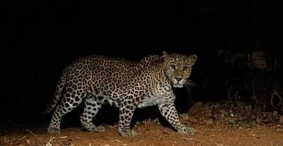 असोला भट्टी अभयारण्य में सप्ताह भर चलने वाला वन्यजीव संरक्षण कार्यक्रम शुरू