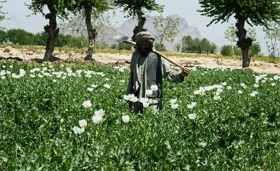 contrary-to-taliban-claims-afghanistan-remains-world39s-largest-opium-supplier