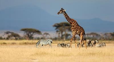 तंजानिया ने पर्यटन रिकवरी के लिए 3.91 करोड़ से ज्यादा डॉलर आवंटित किया