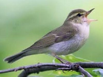 मप्र के नौरादेही अभ्यारण्य में 165 किस्म के दुर्लभ पक्षी
