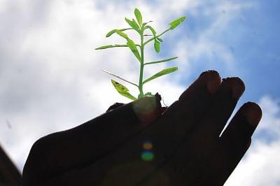कुवैत ने जलवायु चुनौतियों से निपटने के लिए वृक्षारोपण अभियान शुरू किया