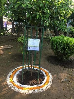 दिल्ली : दक्षिणी निगम के गिफ्ट ए ट्री अभियान का ऑनलाइन मॉड्यूल शुरू