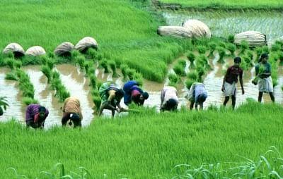 बिहार में बाढ़, अतिवृष्टि से फसलों के नुकसान की क्षतिपूर्ति के लिए 550 करोड़ रुपये मंजूर