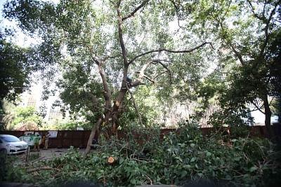 पुलिस ने कर्नाटक में पेड़ काटने पर सवाल उठाने को लेकर कार्यकर्ता को दी चेतावनी