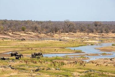 दक्षिण अफ्रीका नवंबर में राष्ट्रीय उद्यानों तक मुफ्त सुविधाएं कराएगा उपलब्ध