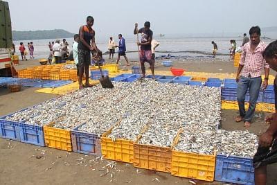 केवल मछली निर्यात करने के बजाय समुद्री उत्पादों पर ध्यान दिया जाना चाहिए : पीएम मोदी