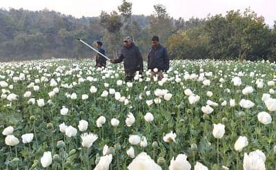 झारखंड के चतरा में अफीम की खेती रोकने के लिए ड्रोन की मदद से चलेगा अभियान