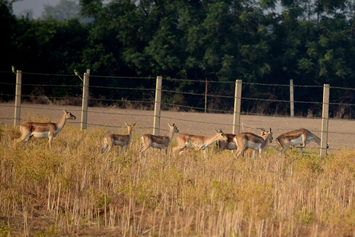 अबोहर वन्यजीव अभयारण्य के बारे में जानकारी - Abohar Wildlife Sanctuary in Hindi