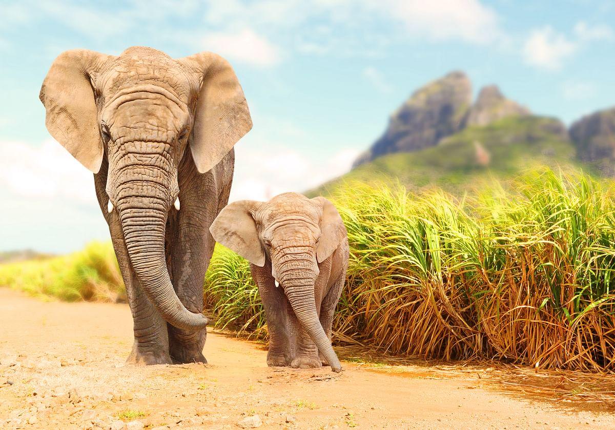 अचानकमार वन्यजीव अभयारण्य के बारे में जानकारी - Achanakmar Wildlife Sanctuary in Hindi