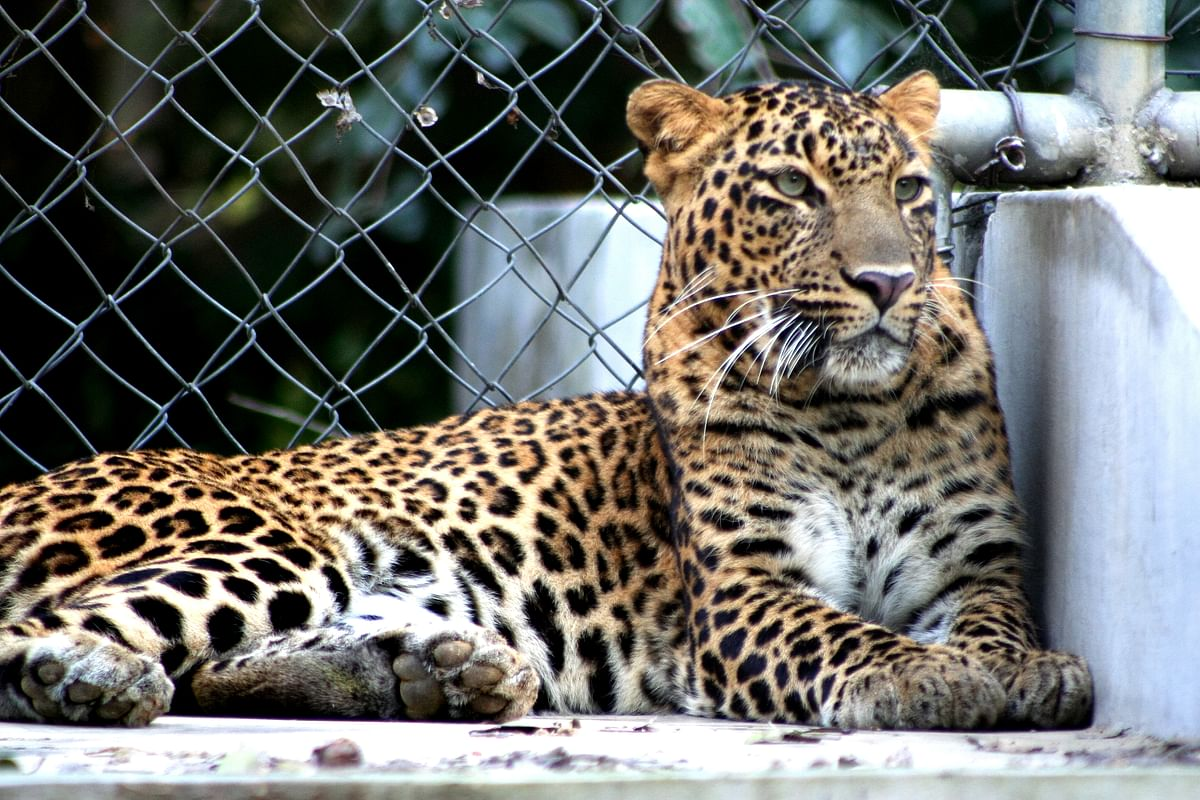 एलेन फोरस्ट ज़ू के बारे में जानकारी - Allen Forest Zoo in Hindi