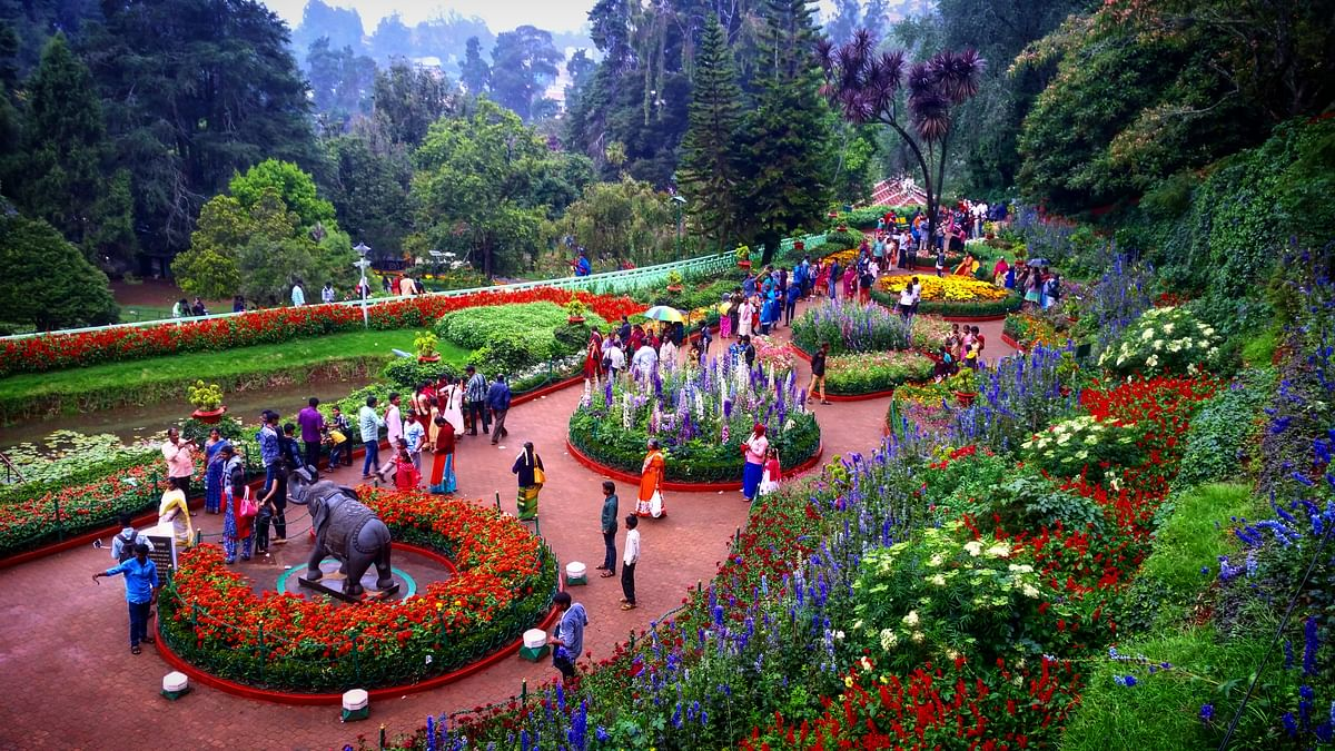 बोटेनिकल गार्डन के बारे में जानकारी - Botanical Garden Ooty in Hindi