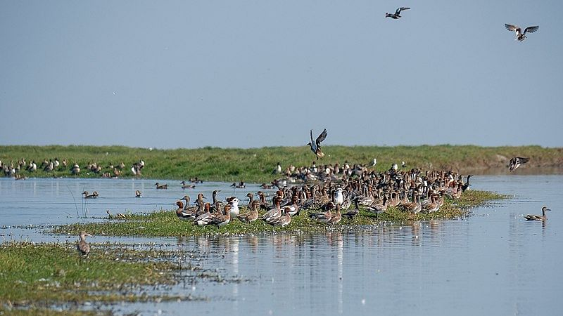 चिल्का झील पक्षी अभयारण्य - Chilka Lake Bird Sanctuary