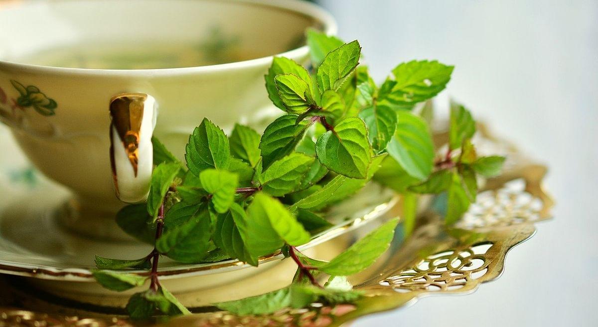 ग्रीन टी के फायदे और नुकसान, बनाने की विधि और पीने का सही समय - Benefits and Side Effects of Green Tea in Hindi