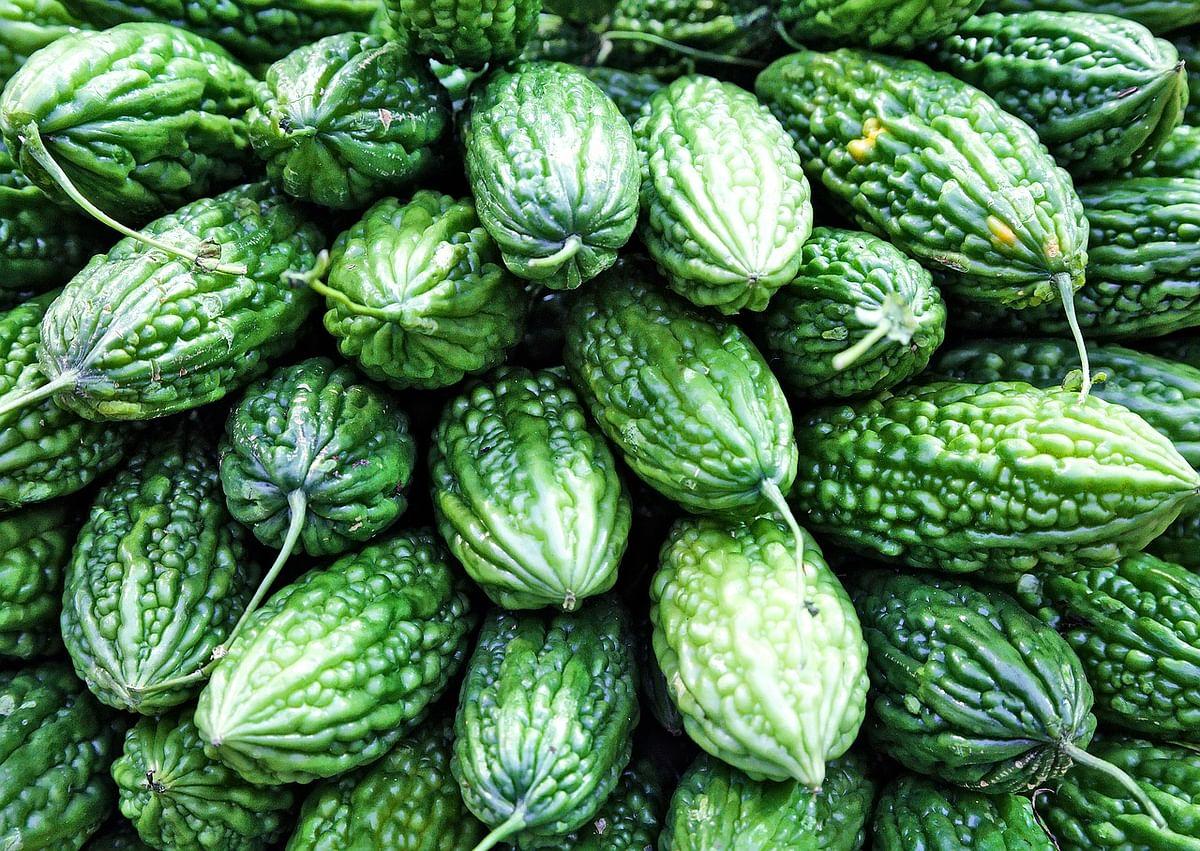 क्या आप को करेला खाने का सही तरीका आता है ? - Health Benefits Of Bitter Cucumber in Hindi