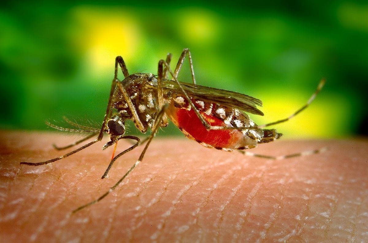 डेंगू के घरेलू उपाय - Home Remedies for Dengue in Hindi