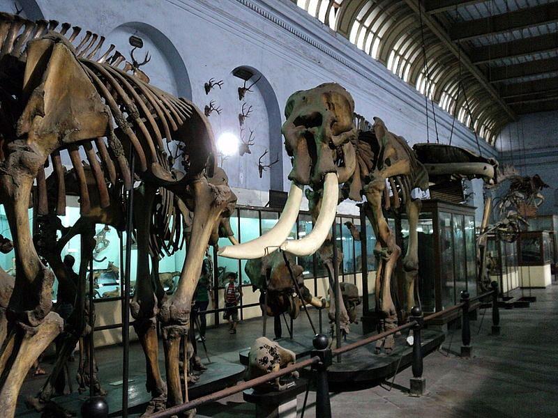 भारतीय संग्रहालय कोलकाता के बारे में जानकारी- Indian Musuem Kolkata in Hindi