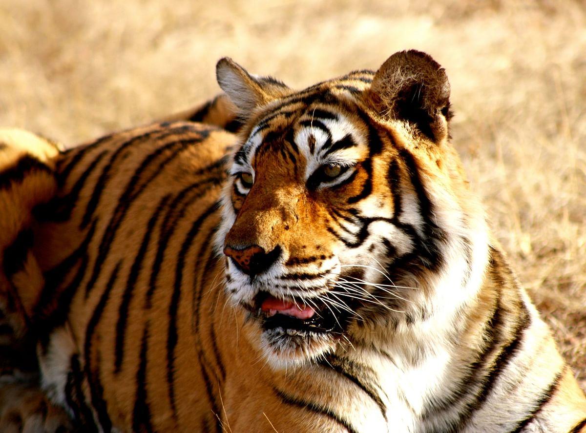 कान्हा राष्ट्रीय उद्यान के बारे में जानकारी - Kanha National Park Madhya Pradesh in Hindi