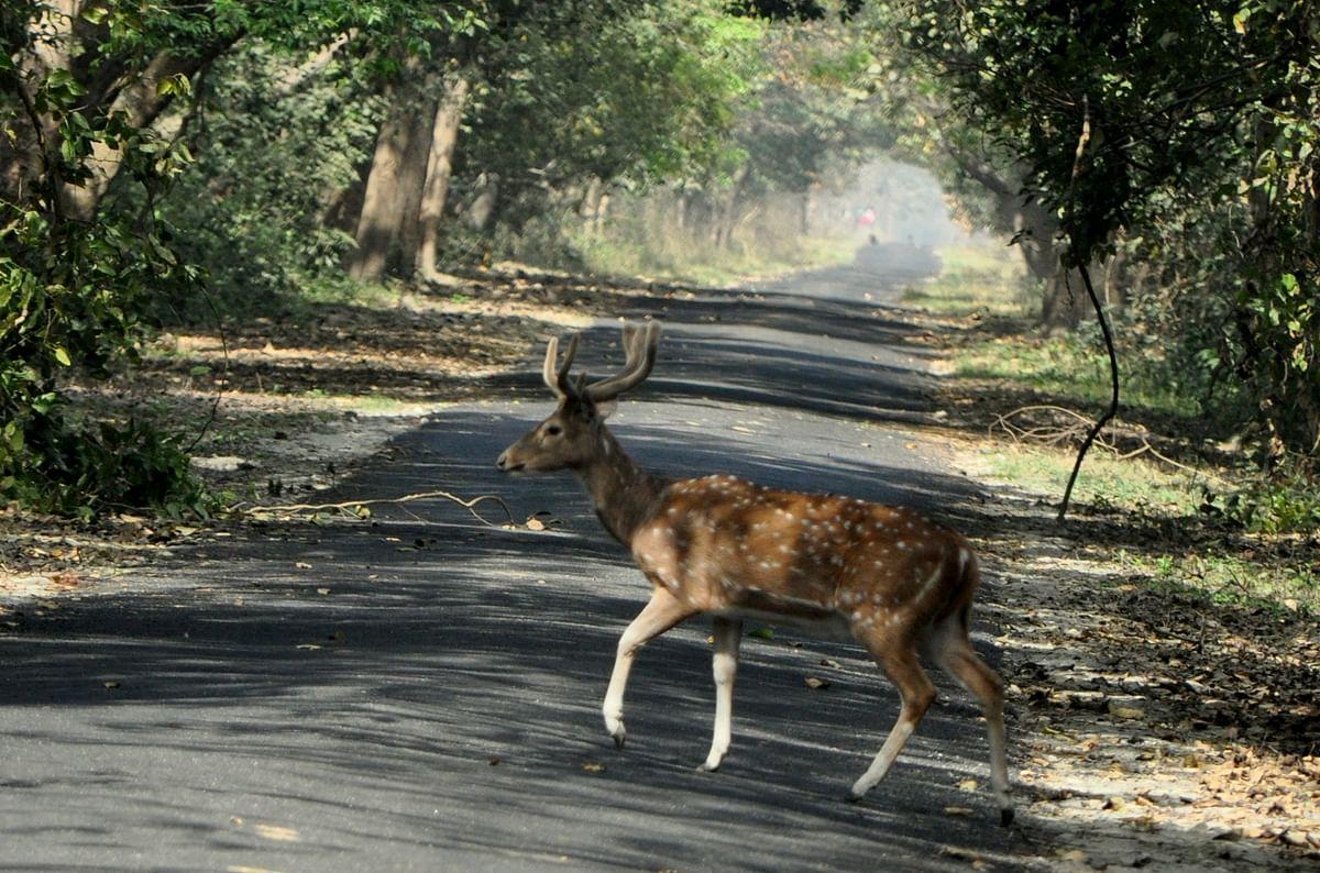 कतर्नियाघाट वन्य जीव अभ्यारण के बारे में जानकारी - Katraniye Ghat Wildlife Sanctuary in Hindi