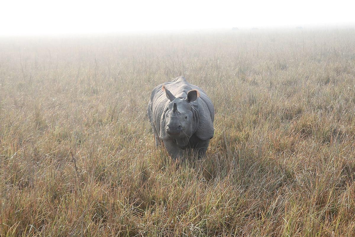 काजीरंगा राष्ट्रीय उद्यान के बारे में जानकारी - Kaziranga National Park in Hindi