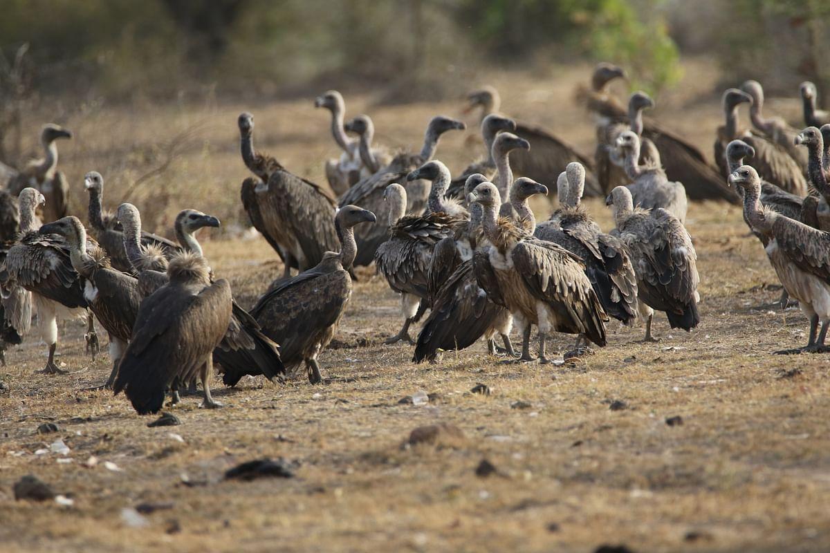 माधव राष्ट्रीय उद्यान के बारे में जानकारी - Madhav National Park Shivpuri in Hindi