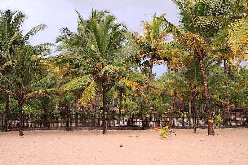 मरारी बीच के बारे में जानकारी - Marari Beach in Hindi