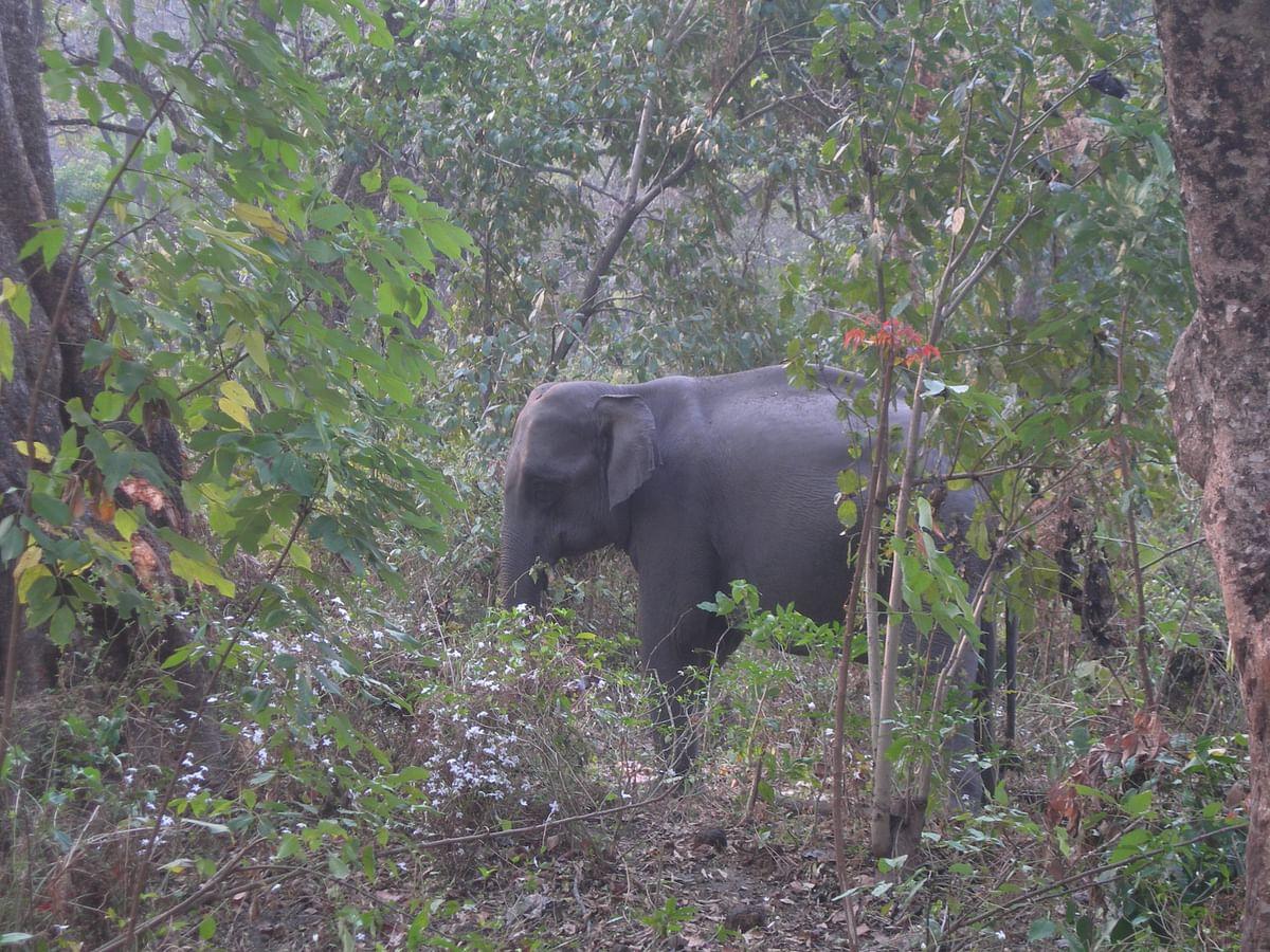 नामबोर वन्यजीव अभ्यारण के बारे में जानकारी - Nambor Wildlife Sanctuary in Hindi