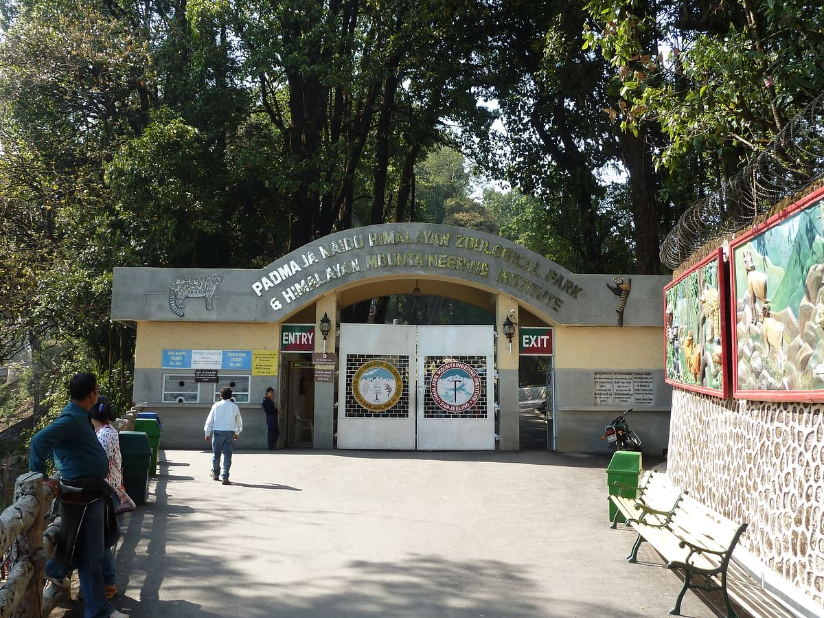 पद्मजा नायडू हिमालयन जूलॉजिकल पार्क - Padmaja Naidu Himalayan Zoological Park in Hindi