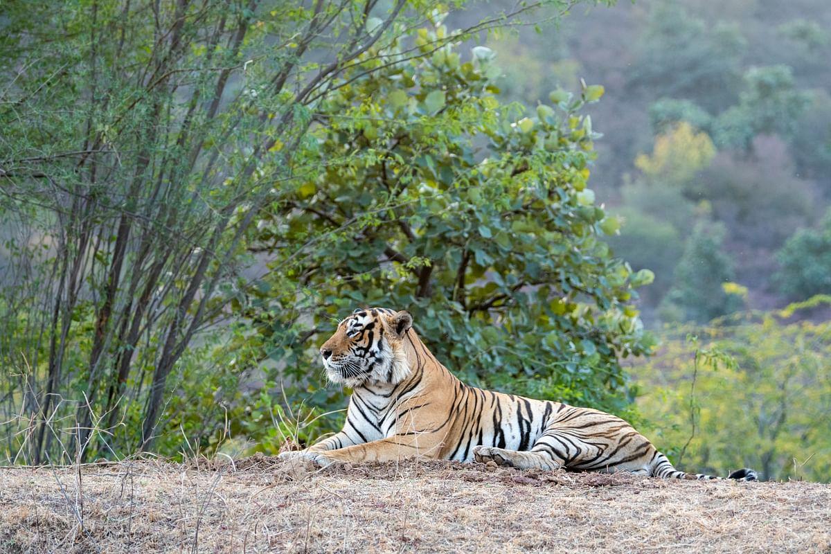 पन्ना राष्ट्रीय उद्यान के बारे में जानकारी - Panna National Park Madhya Pradesh in Hindi