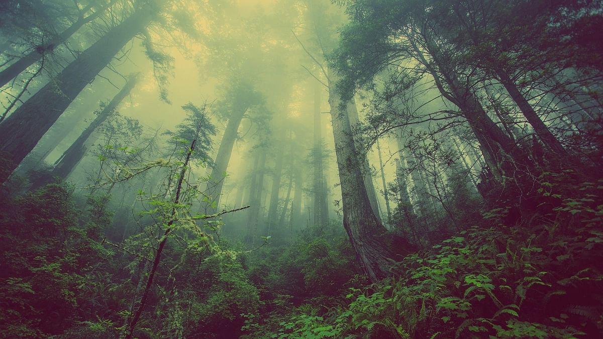 पेंच राष्ट्रीय उद्यान के बारे में जानकारी - Pench National Park in Hindi