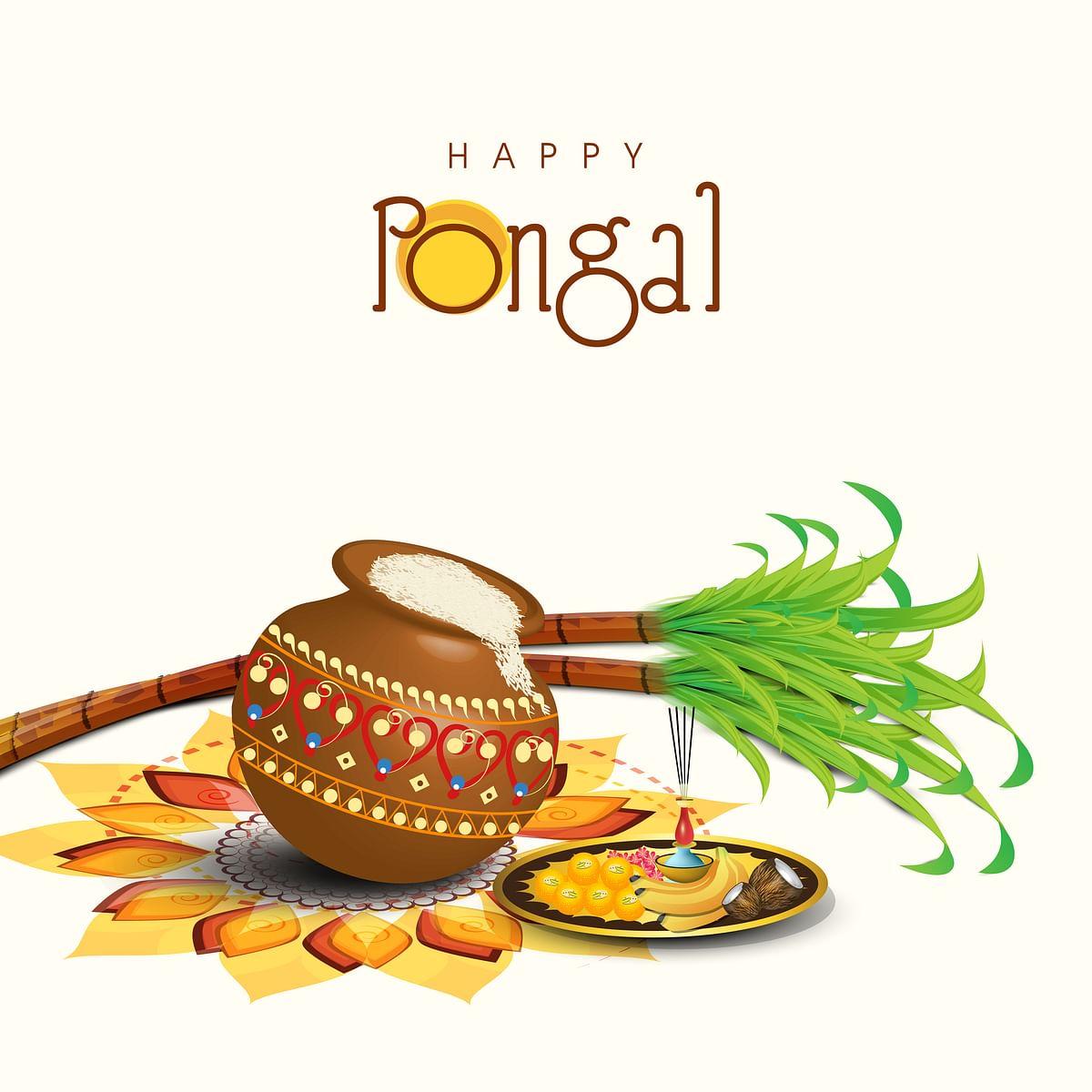 पोंगल - Pongal