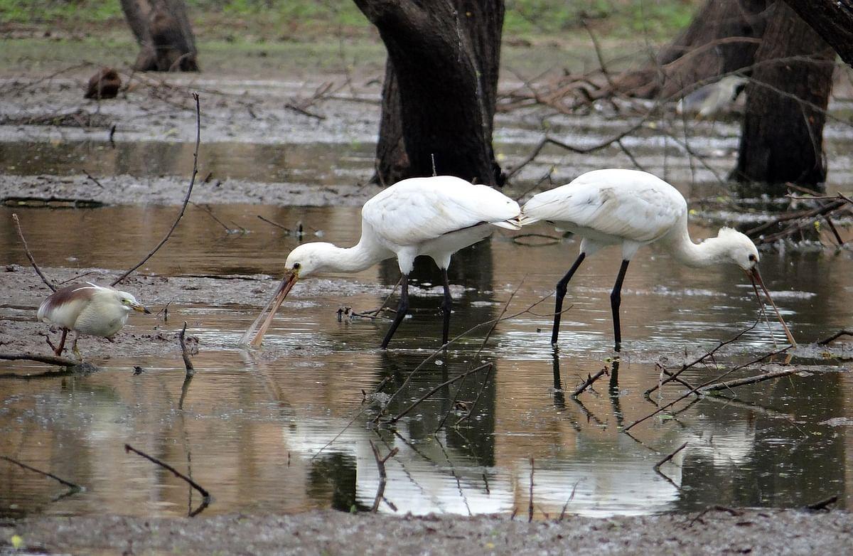 सन्दी पक्षी अभयारण्य के बारे में जानकारी - Sandi Bird Sanctuary in Hindi