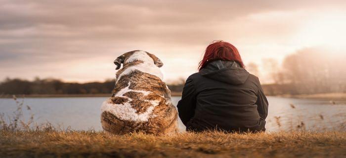 सर्दियों में कुत्तों की देखभाल कैसे करें