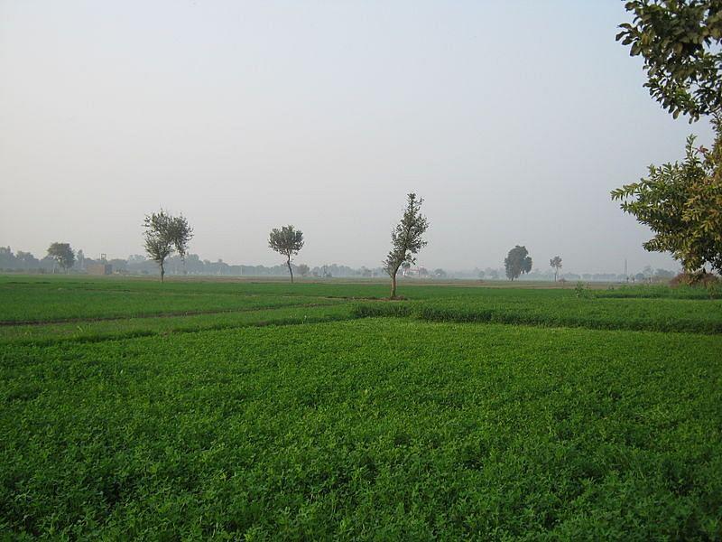 सोनीपत के बारे में जानकारी - Sonipat in Hindi