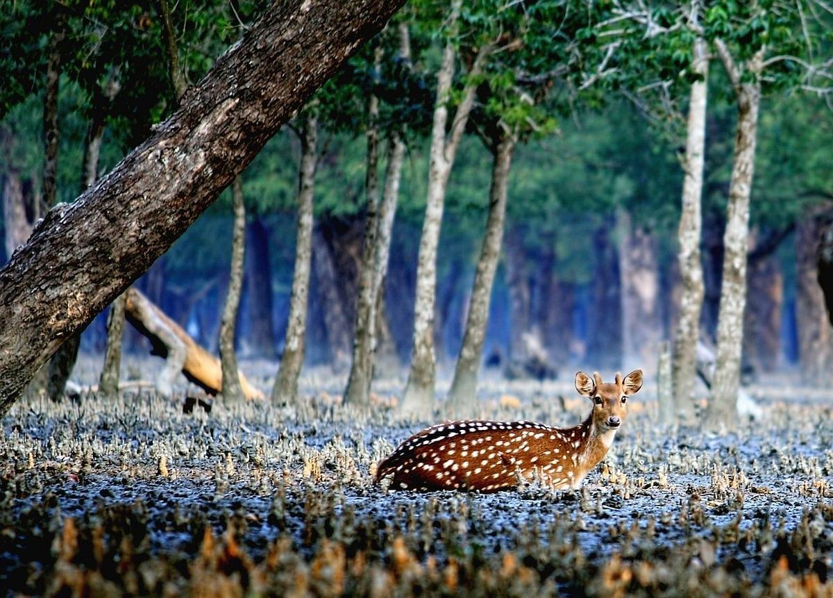 सुंदरबन नेशनल पार्क के बारे में जानकारी - Sundarban National Park West Bengal in Hindi
