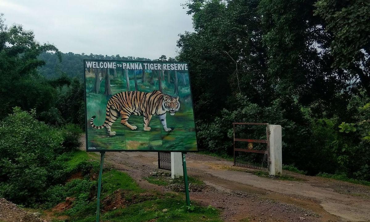 पन्ना: टाईगर रिज़र्व में बाघों की सुरक्षा पर फिर मंडरा रहा है खतरा