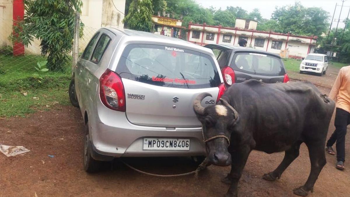 विदिशा: तहसीलदार ने मांगी रिश्वत, तो किसान ने बांध दी कार से भैंस