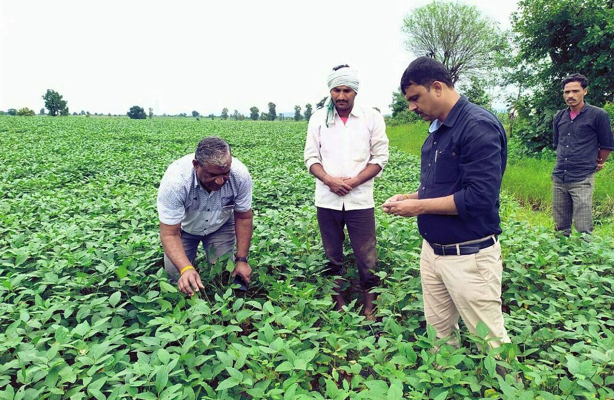 होशंगाबाद: खरीफ फसलों में हुए नुकसान का कमिश्नर ने किया निरीक्षण
